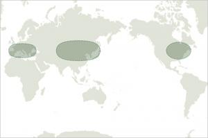 map:オーク